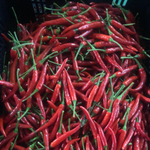 fresh chili pepper VIETNAM 1