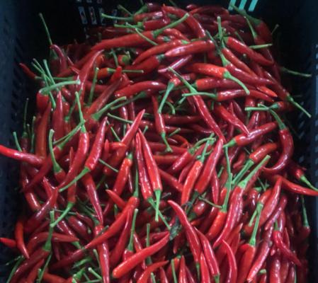 fresh chili pepper VIETNAM 1