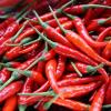 fresh chili pepper VIETNAM 6